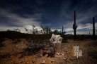 USA_AZ_Organ pipe cactus (03)